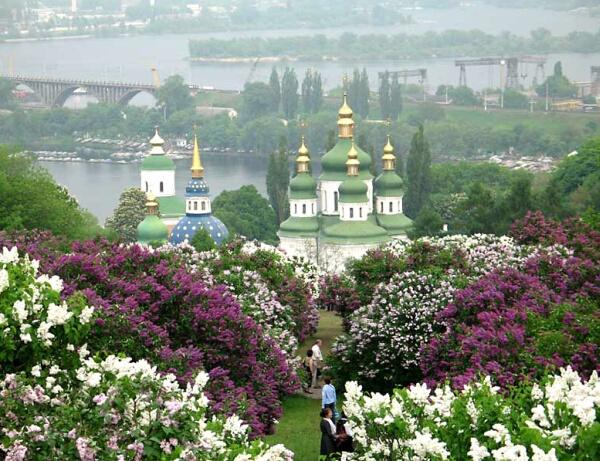 Цветет сирень, Ботанический сад, Киев